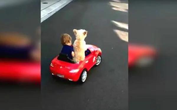 Mira esta perrita manejar este carro, ¡enloquecerás!