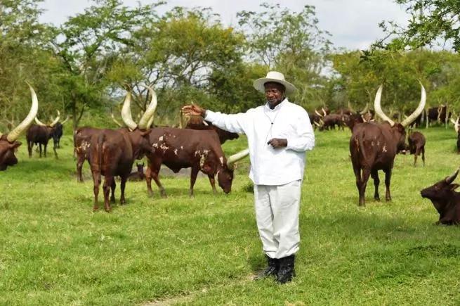 Polisi waua joka katika shamba la Rais Yoweri Museveni