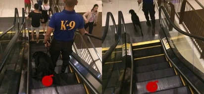 Netizens are furious on this Facebook user who shared photos of K9 pooping on mall's escalator