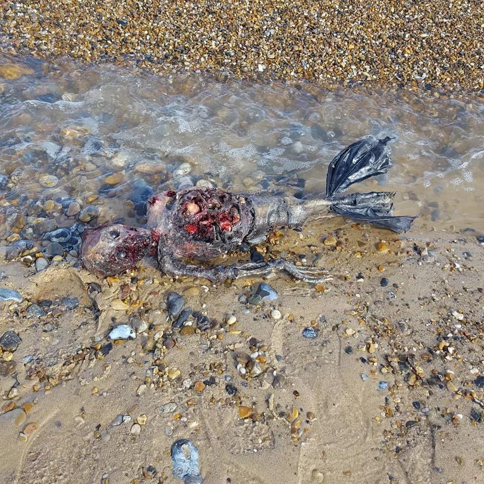Una sirena fue encontrada en la playa