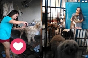 This Kindhearted Filipina from Bacolod adopted 75 stray dogs!