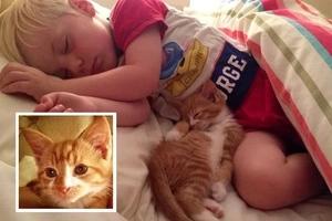 Enferma banda de jóvenes torturó a gato y lo publicó en Snapchat