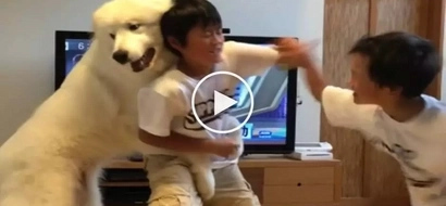 Affectionate pet dog attempts to stop fist fight between angry brothers