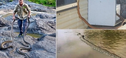 Snake invasion! Locals fight off dozens of deadly reptiles who crawl into their homes after heavy flood (photos)