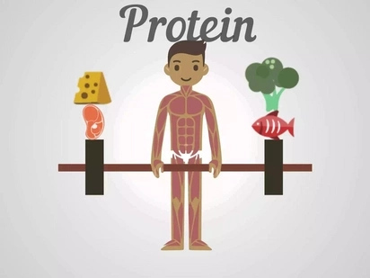 Complete List of Rich in Protein Foods: Know What to Eat