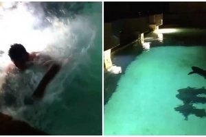 Man jumps into tank with SHARKS, then this happens (photos, video)