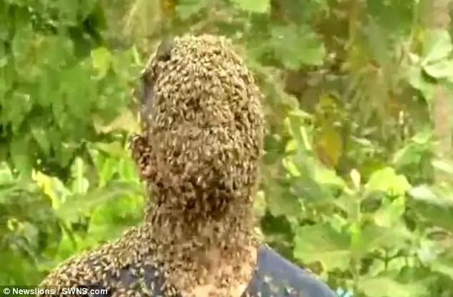 """Nature described the bees' stings as """"playful bites"""""""