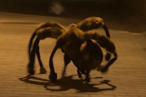 It looks like a dog in a spider's suit!