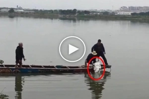 Netizens surprised with this 'guest' coming out of the water... A real miracle!