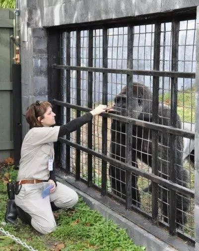 Ex-zookeeper defends killing gorilla to save boy