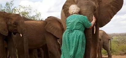 Acto de la bondad: Mujer salva a elefantes huérfanos durante 50 años con su propia receta de leche