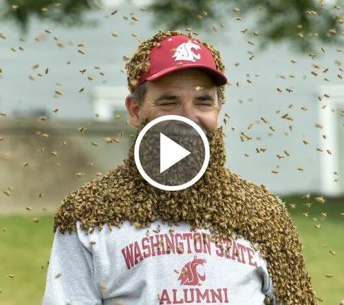 No te pierdas esta increíble barba de abejas