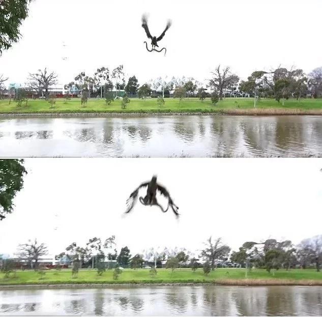 Es esta una suerte de fuerza aérea especial de halcón-serpiente?