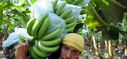 A banana plantation in Maguindanao quelled terrorism in one barangay; here's how
