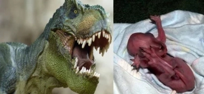 Scientists believe they can recreate dinosaurs; how they do it will shock you!