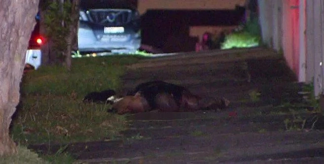 Underworld Criminal EXECUTED In The Street - No Arrests Made Yet