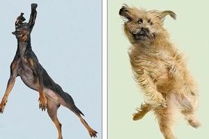 Perros fueron lanzados por el aire para ver su expresión mientras vuelan ¡Los resultados son geniales!