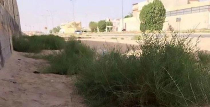 Saudi Stepmom SLIT The THROAT Of Grade 1 Stepdaughter In Daylight