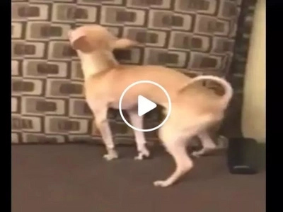 That's how you beat energy gap! Dog caught dancing intensely in viral Facebook video