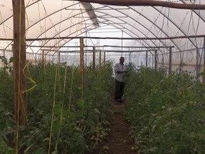 Aquaponics farming system feeding Eastlands community