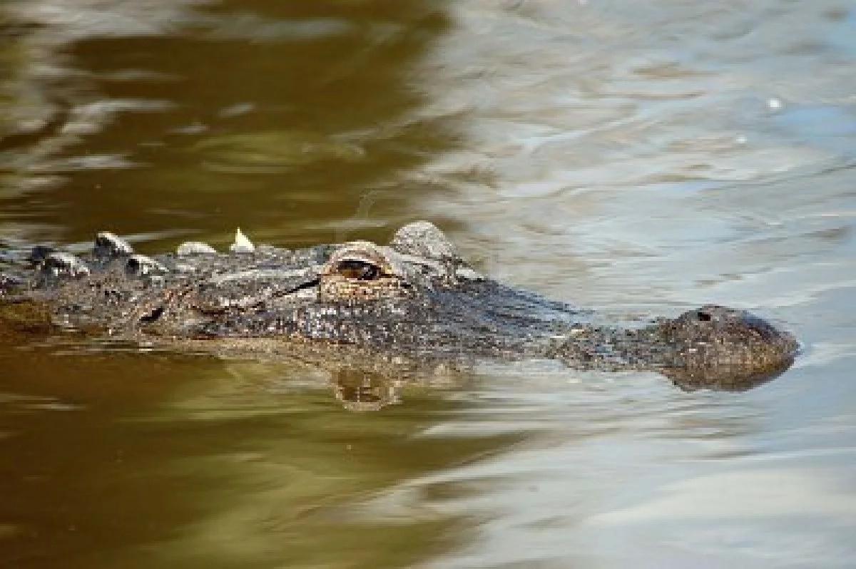 Aterrador ataque de cocodrilo a niño de dos años en Disney