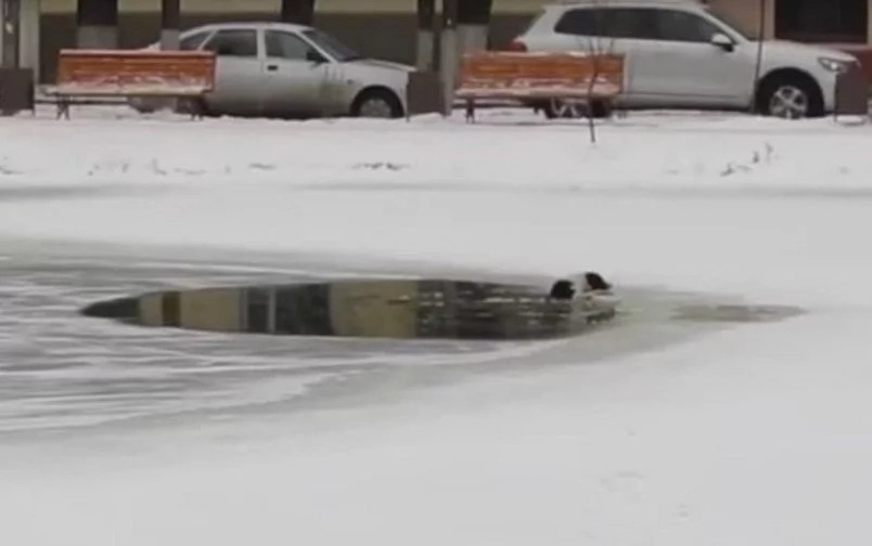 Brave Russian Man Saves A Dog From Drowning In A Frozen Lake