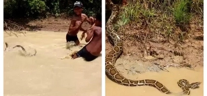 These kids were just having a dip. They later spotted a python swimming with them and all they wanted was to capture it