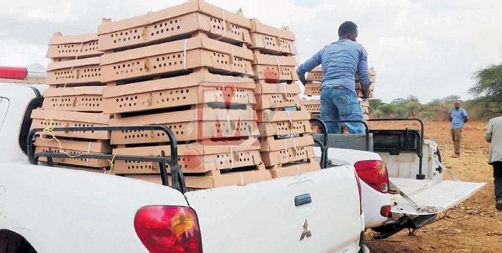 Serikali ya Tanzania yachoma vifaranga 6,400 wa kuku kwa misingi kuwa wametoka Kenya
