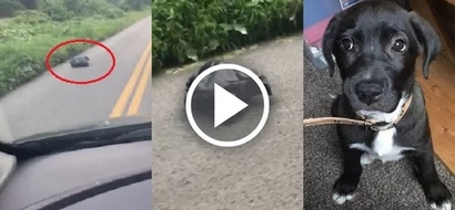 Woman looked into a moving trash bag on the roadside and saved an innocent live