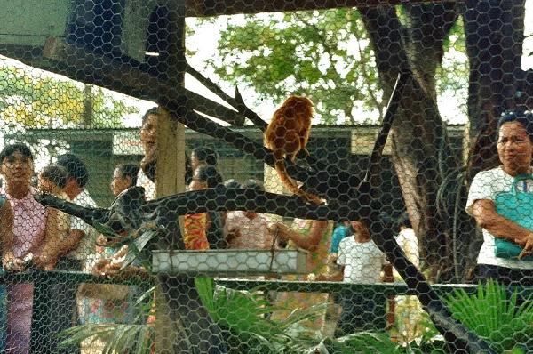 Credits: edgarjlaw (Manila Zoo)