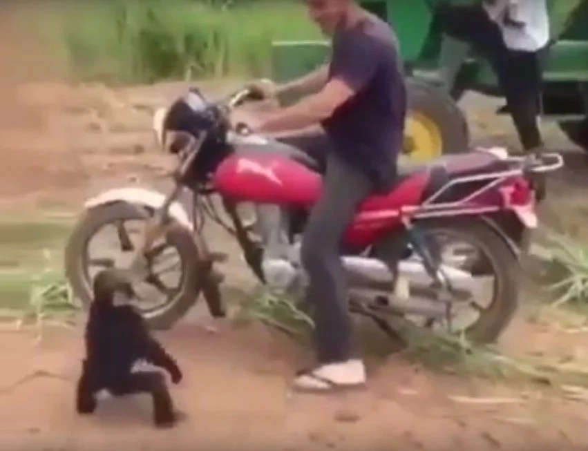 Cute Monkey Goes Berserk When He Isn't Allowed To Ride A Motorcycle