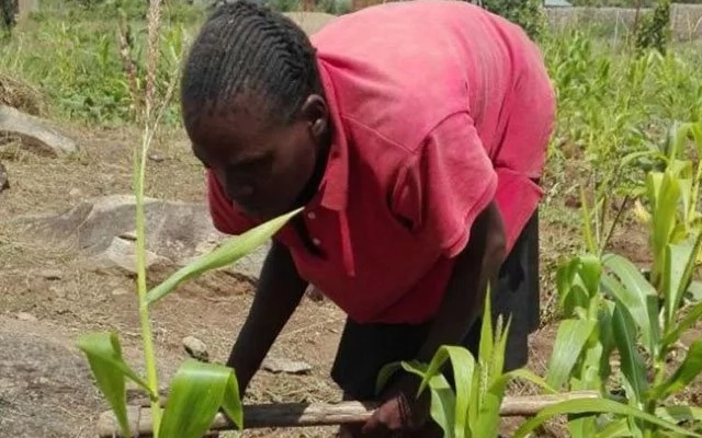 Read INSPIRING story of blind mother of 2 who fights unemployment through farming (photo)