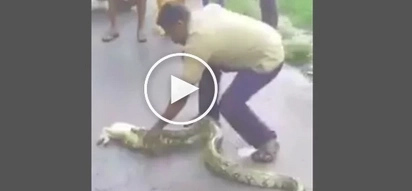 Two men bitten by snake in Cebu while trying to catch the reptile