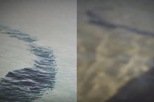 Can These Sea Creatures Be FOR REAL?