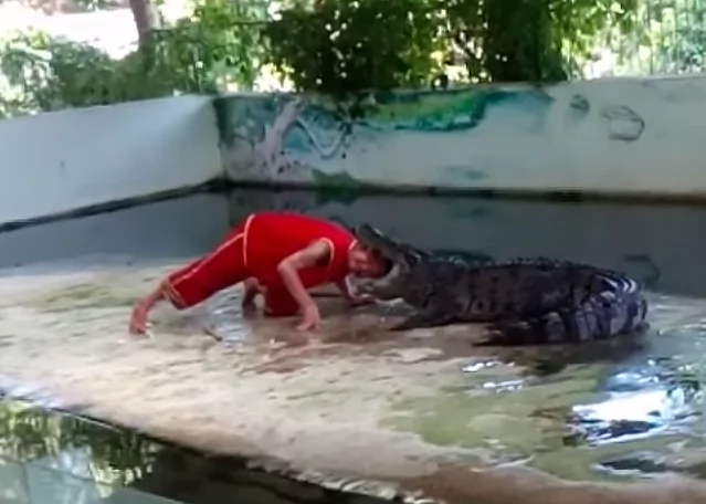 Horrifying moment daring man puts his head between crocodile's jaws, nearly gets decapitated