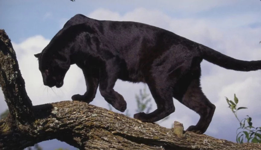 5 Beasts That Scientists SWEAR Do Exist - Unbelievable But Apparently True