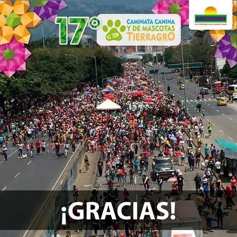 Mascotas disfrazadas se tomaron las calles de Medellín