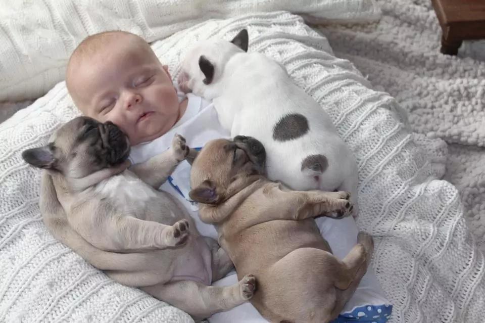Mamá trae al bebé recién nacido a casa. Entonces el perro de la familia sorprende a todos cuando hizo esto