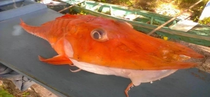 Could this be another warning from the ocean about the end? Villager shares photos of weird fish captured in Romblon