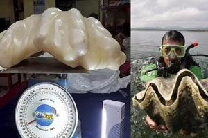 Lucky Pinoy fisherman finds the largest monster pearl in the world! It's worth more than $100 million!