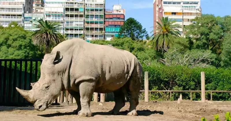 2.400 especies regresan a su hábitat tras cierre de zoológico en Argentina