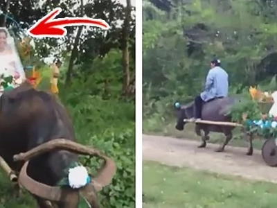 "Bride rides a carabao carriage to church on her wedding day, amazes netizens with her unique, traditional ""bridal car"""