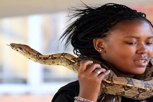 121cm python gives neck MASSAGE to customers in this hair salon (photo)