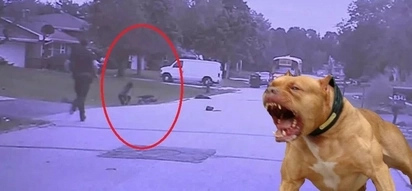A police officer saved the lives of two girls that were attacked by a pair of vicious pitbulls
