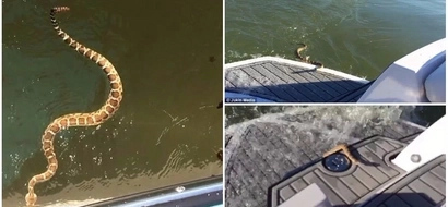 Watch terrifying video of deadly rattlesnake attempting to swim onto a boat