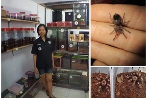 Spider-woman! Meet woman, 28, who lives with 1500 pet TARANTULAS (photos)