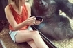 Breathtaking! Woman and gorilla share a light moment at a zoo watching videos on phone