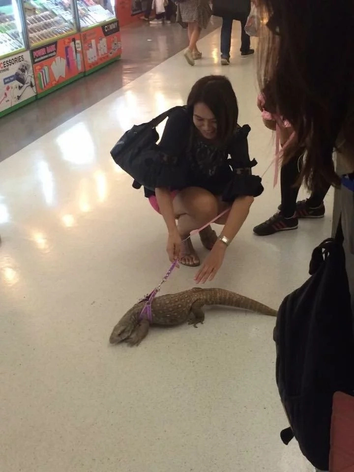 This girl was surprised with a lizard