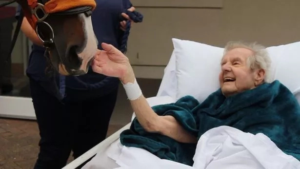 Tearful moment a dying 87-year-old man is granted his final wish to feed horse one last time