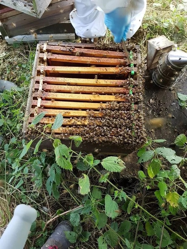 Amanda estimated said six hives and at least four queen bees were stolen